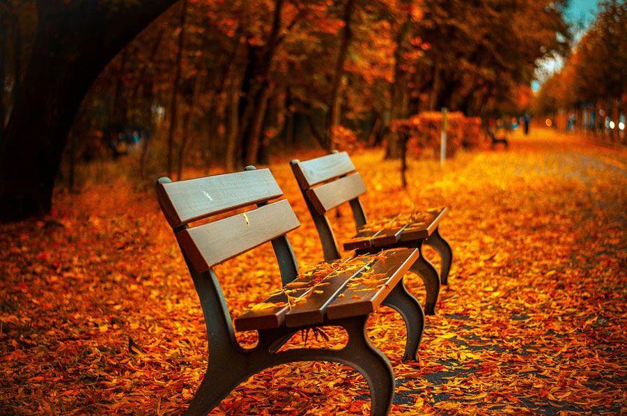 imagen de otoño volver a la rutina