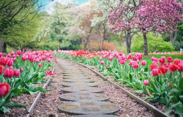 [AGAO0108] Instalación y Mantenimiento de Jardines y Zonas Verdes (CSIF)- 250 Horas